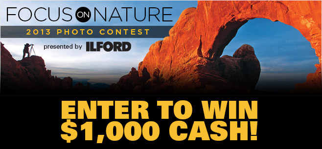 top Focus on Nature Photography Contest is Closing Soon!