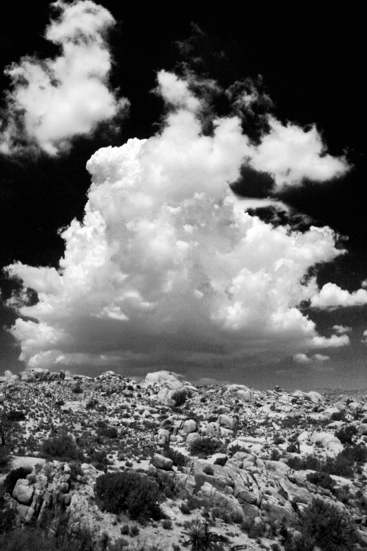 Thundercloud Over Joshua Tree