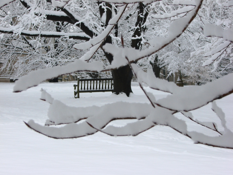 View Through Snow-covered Branches