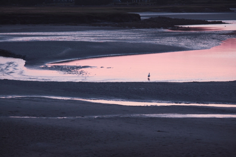 Pink Tide, Maine