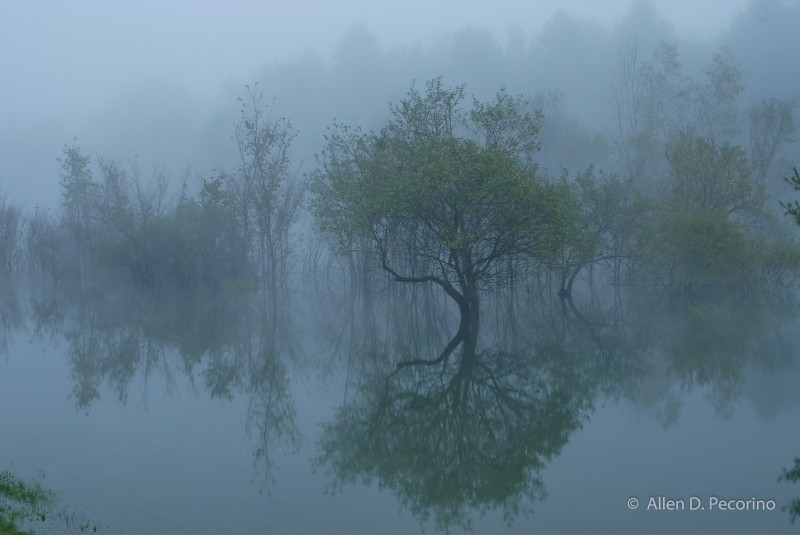 Morning Fog And Reflections