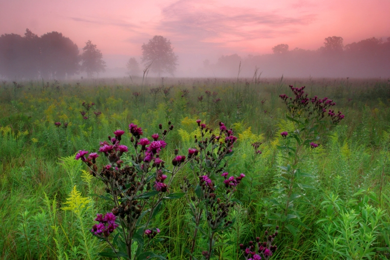 Foggy Lakeplain Prairie At Dawn