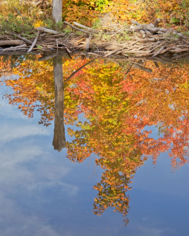 Beaver Dam Reflection