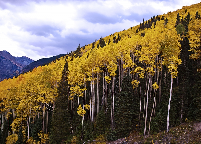 Fall Color 2012  Telluride, Co.