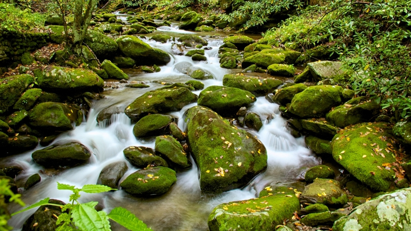 Roaring Fork, Smoky Mountains