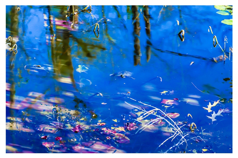 A Watercolor Turtle Pond