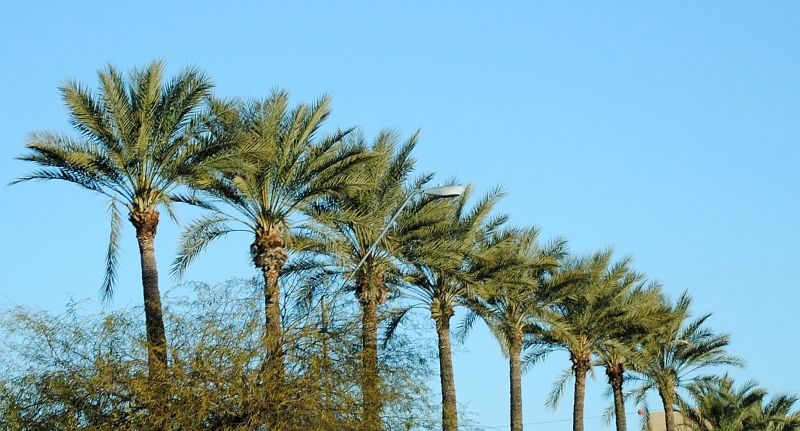 Palm Trees In Arizona?