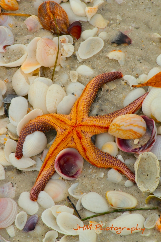 Sanibel Star