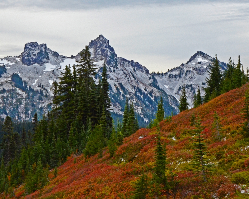 Fall In Mt Rainier National Park