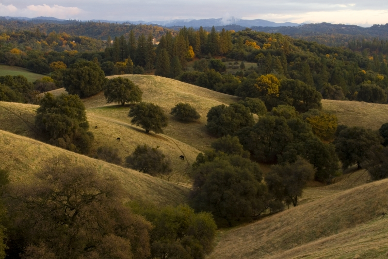 Amador Valley In Autumn