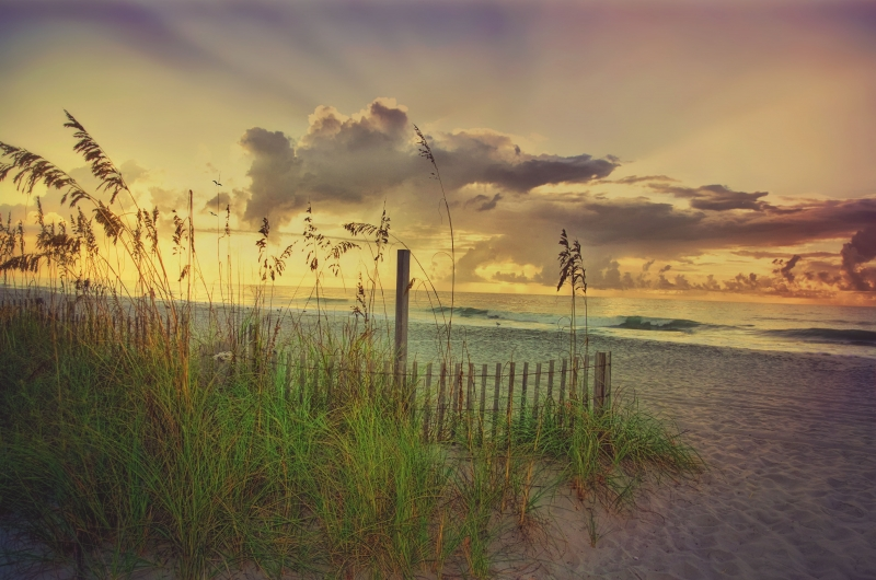 Sunlight And Seaoats