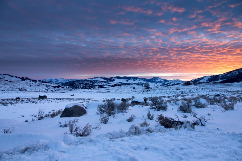 Winter Sunrise In Yellowstone