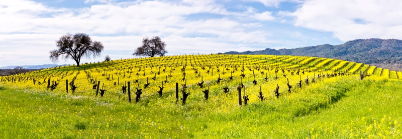 Napa Valley Wine Country In Spring