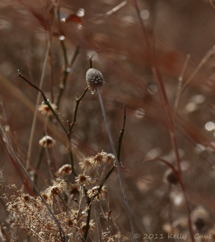 Native Grasses And Flowers