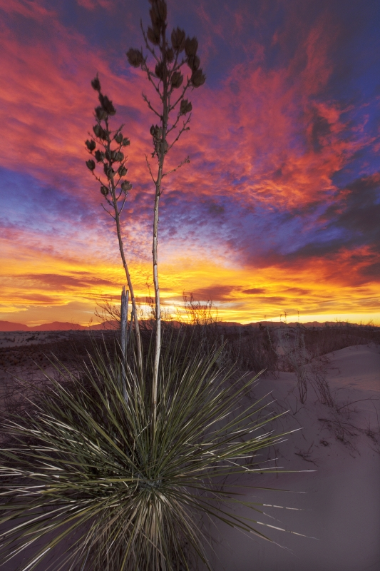 White Sands Sunset With Yucca