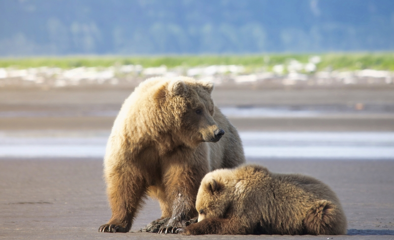 Mother & Cub Clamming