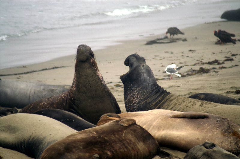 A Seals Disagreement
