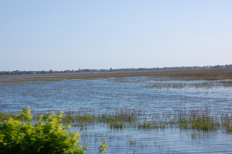 Marshes Of The Alantic Ocean
