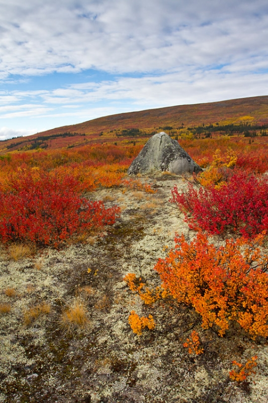 Fall Colors In Yukon