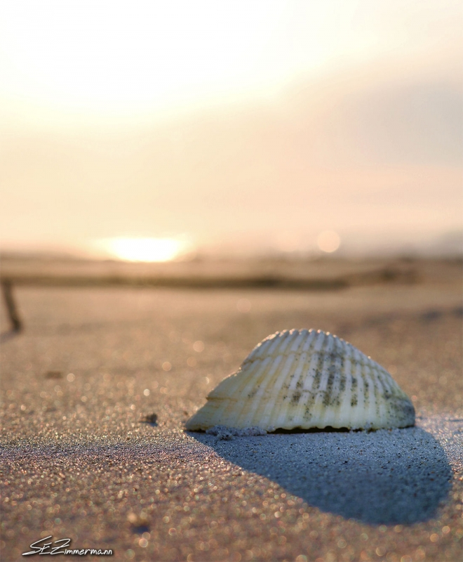 Seashell At Sunrise
