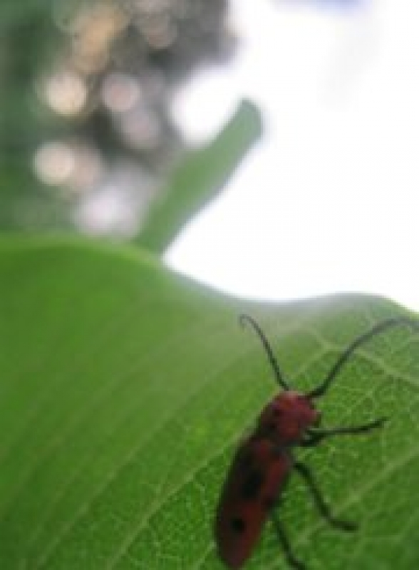 Little Bug On Leaf