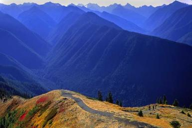 Hurricane Ridge / Olympic Peninsula