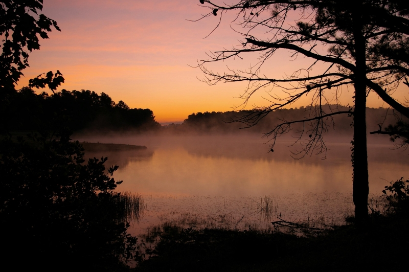 Mist At First Light