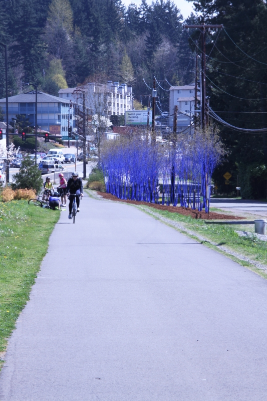 Bike Path On Bothell Way