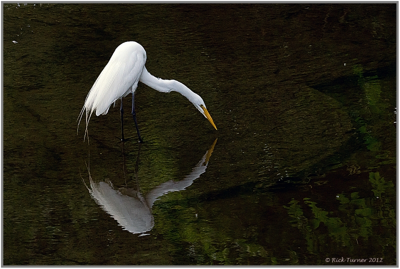 Lonely Egret