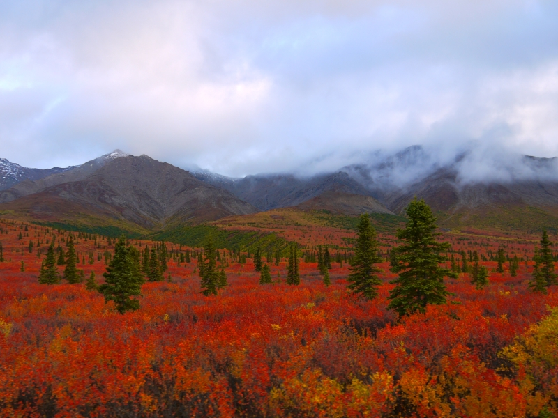 Peak Color In Denali