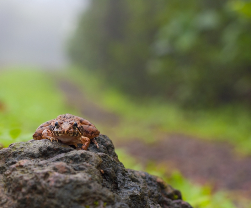 Frogscape