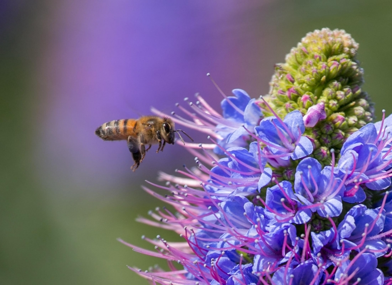 Spring Busy Bee