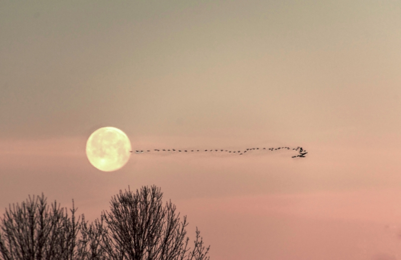 Morning Fly By Full Moon
