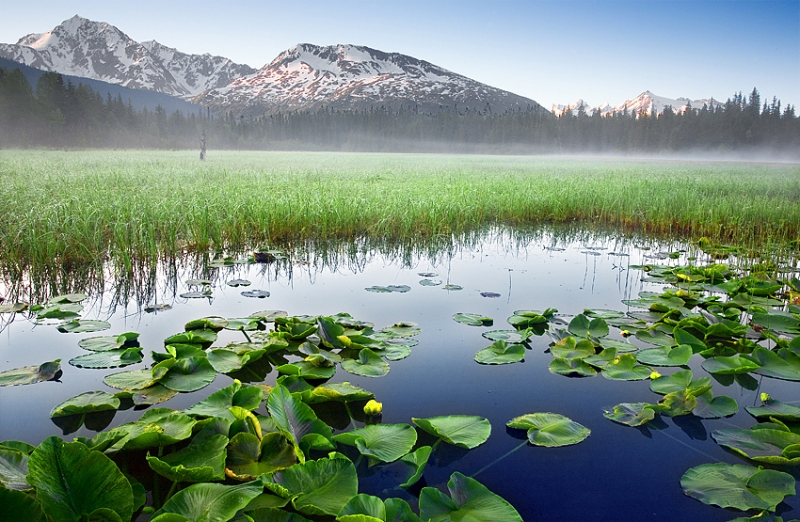 Lily Pond With Morning Fog  Chugach National Forest