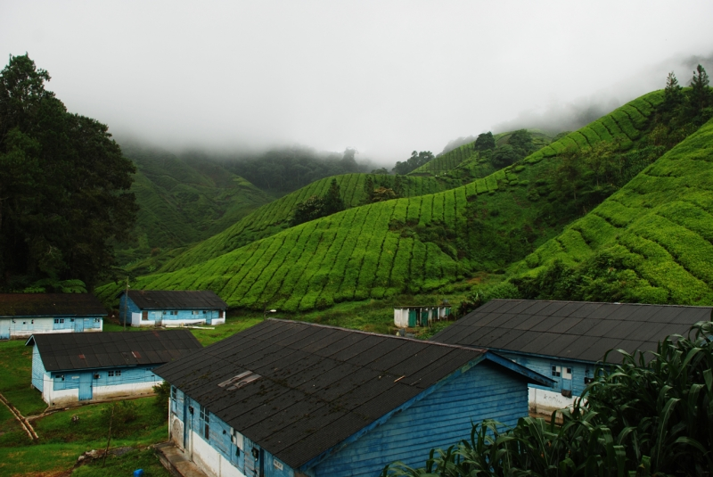 Tea Farm Village At Cameron Highlands