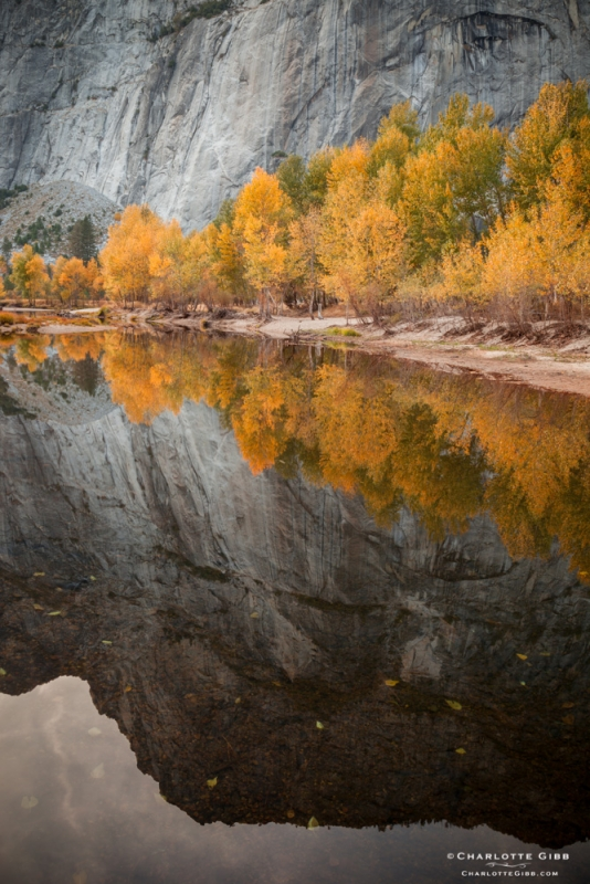 Yosemite Fall Colors Reflected In The Merced River