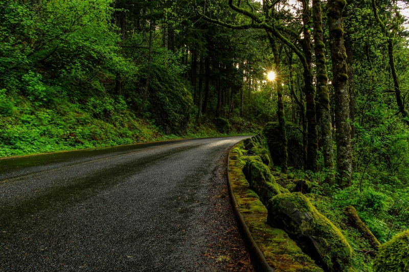 Sunset On A Lush Green Road In Columbia Gorge Portland Or