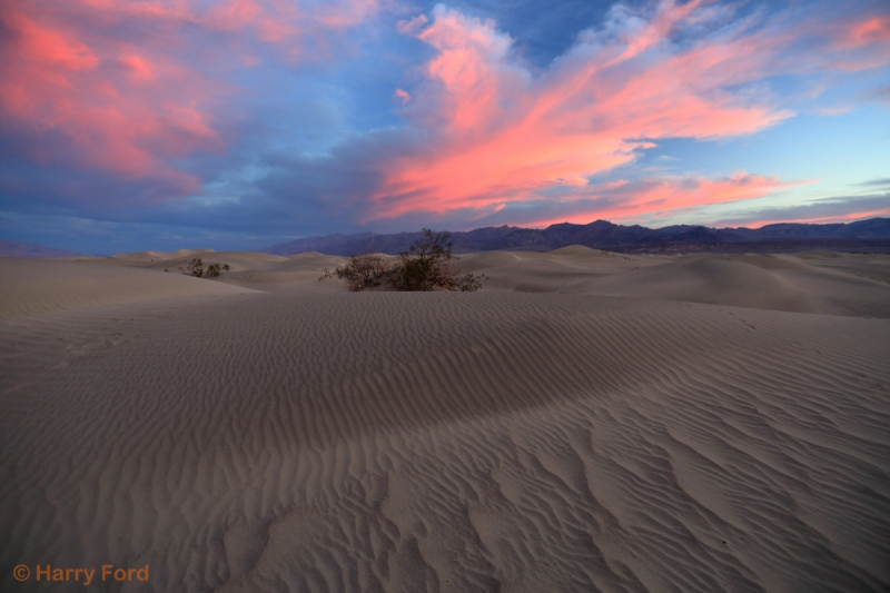 Blizzard Of Sand Drifts At Sunrise