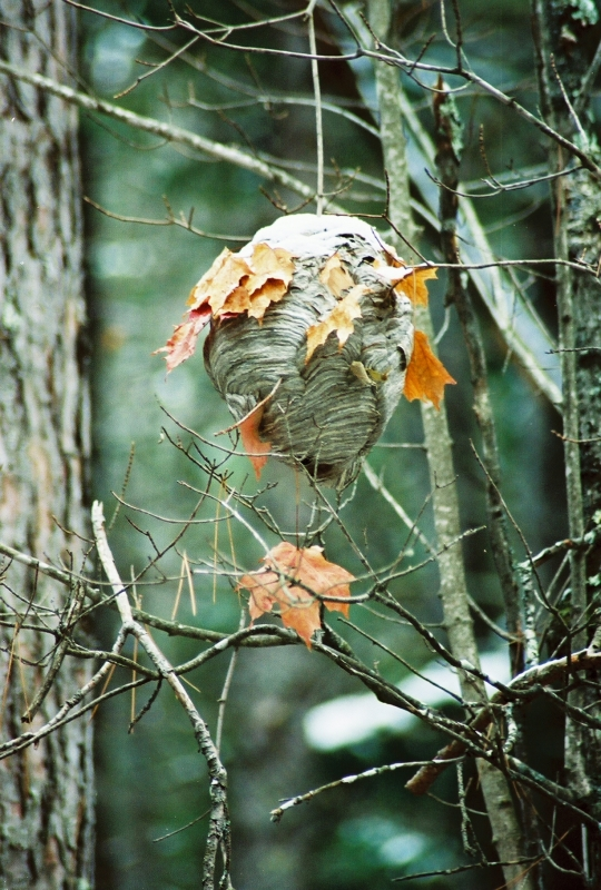 Autumn Nest