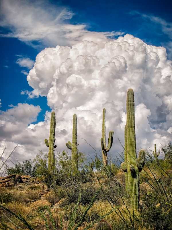 Saguaro Monsoon