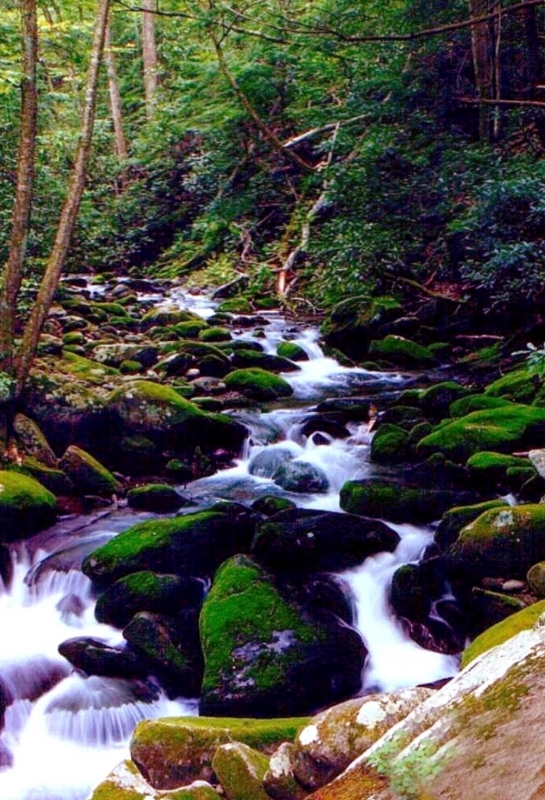 Roaring Forks Mountain Stream