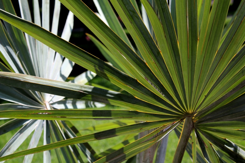 Palm Leaves Two