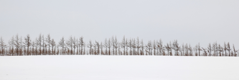 Stand Of Trees In Field Of Snow