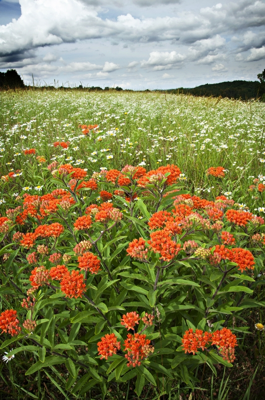Rhea County Wildflowers 1