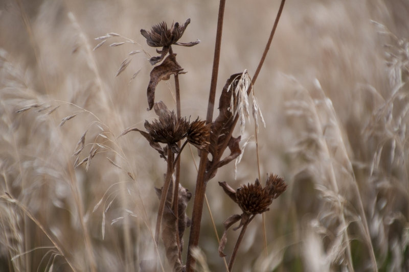 Early Autumn Grasses