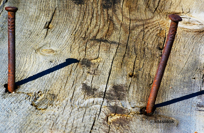 Nails On Wood Left To Rot