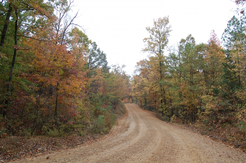Fall Dirt Road