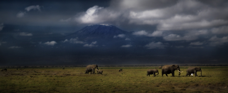 Dream Of Kilimanjaro