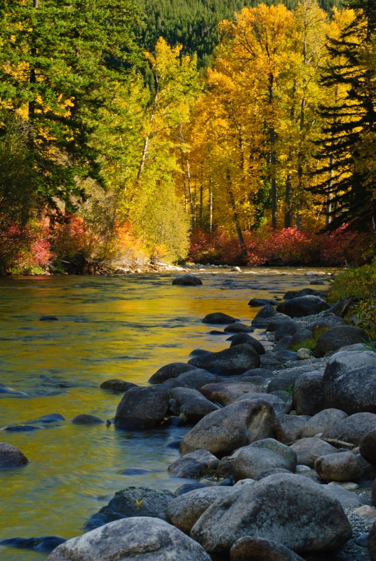 Nason Creek In Autumn