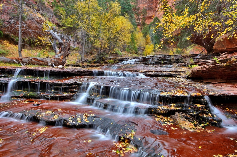 Left Fork Of North Creek, Zion N.p.